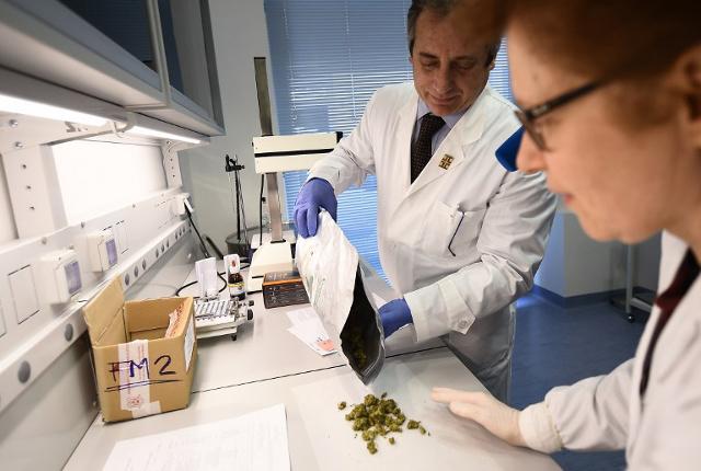 exército itália cannabis medicinal